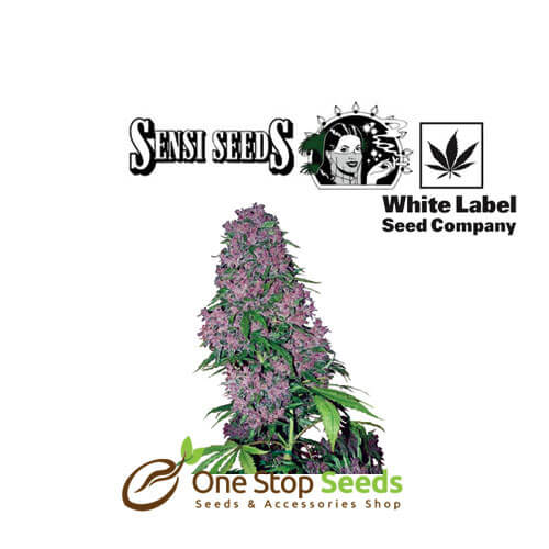 Purple Bud feminised White Label