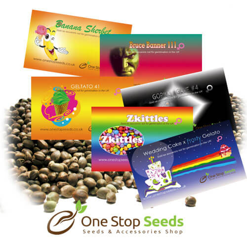 One Stop seeds Archives - One Stop Seeds & AccessoriesOne